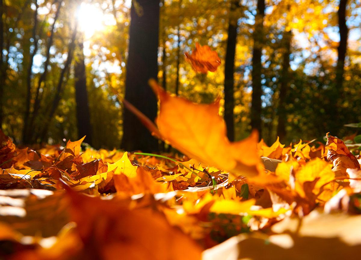 fall leaves falling